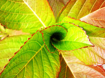 Odgórny widok zielona tłustoszowata roślina Obraz Royalty Free
