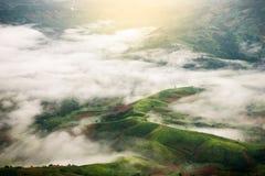 Odgórny widok zielone góry z chmurami w dżdżystym Zdjęcie Stock