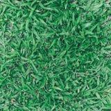 Odgórny widok zielonej trawy, trawy ziemi i trawy pole Zdjęcie Royalty Free
