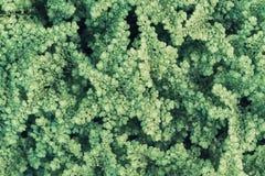 Odgórny widok zielonej trawy, trawy ziemi i trawy pole Zdjęcie Stock