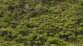 Odgórny widok Zwarci Tropikalni Forest Green drzewka palmowe zdjęcia royalty free