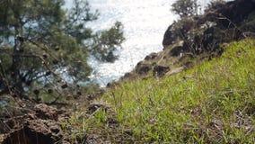 Odg?rny widok przez trawy na morzu zbiory