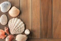 Odg?rny widok r??ny morze ?uska na drewnianym tle z kopii przestrzeni? Lato czasu poj?cie obrazy royalty free