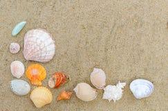 Odg?rny widok r??ny morze ?uska na piasku z kopii przestrzeni? dla teksta fotografia royalty free