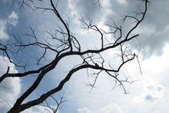Odgałęzienie nieba drzewa phitsanulok zdjęcie stock