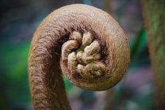 Odgałęzienie tropikalna egzotyczna roślina w dżungli fotografia royalty free