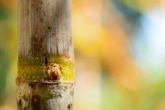 Odgałęzienie trzcina fotografia royalty free