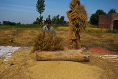 Odgradzania Rice adra zdjęcia stock