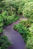 Odgórnego widoku natury śladu spaceru Forest Green świeżego powietrza drewniany przejście Obrazy Stock