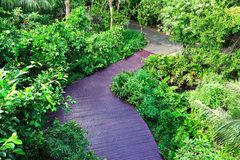 Odgórnego widoku natury śladu spaceru Forest Green świeżego powietrza drewniany przejście Fotografia Stock
