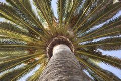 odgórny palmy drzewo Fotografia Royalty Free