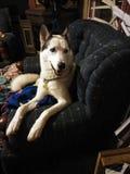 Odin pretty boy sitting stock photography