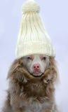 Odio questo cappello Fotografia Stock Libera da Diritti