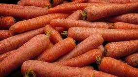 Odiskade morötter från The Field stock video