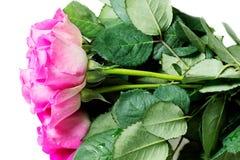 Odizolowywać na biel różowe Róże zdjęcia stock