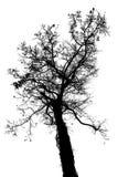 Odizolowywa drzewa Zdjęcia Stock