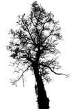 Odizolowywa drzewa Zdjęcie Royalty Free