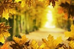 odizolowywająca piękna jesień rama opuszczać istnego biel obraz stock