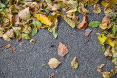 odizolowywająca piękna jesień rama opuszczać istnego biel Obrazy Royalty Free