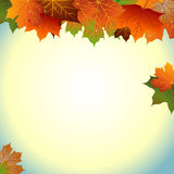 odizolowywająca piękna jesień rama opuszczać istnego biel Obrazy Stock