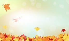 odizolowywająca piękna jesień rama opuszczać istnego biel Fotografia Royalty Free