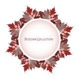 odizolowywająca piękna jesień rama opuszczać istnego biel Wektorowy tło również zwrócić corel ilustracji wektora Kwiecisty wektor ilustracja wektor