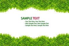 odizolowywająca trawy ramowa zieleń zdjęcia royalty free