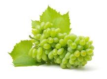 odizolowywająca winogrono świeża zieleń opuszczać biel grapefruits obrazy royalty free
