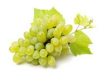 odizolowywająca winogrono świeża zieleń opuszczać biel grapefruits fotografia stock