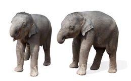 Odizolowywający dziecko słoń, obrazy stock