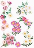 odizolowywający inkasowi brier kwiaty ilustracji