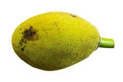 Odizolowywający jackfruit na białym tle Obraz Royalty Free