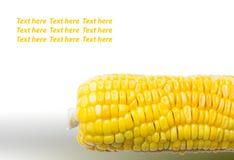 Odizolowywający kukurudza z przestrzenią dla teksta na wierzchołku Obrazy Stock