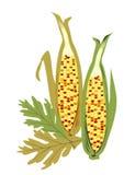 odizolowywający kukurydzany hindus royalty ilustracja