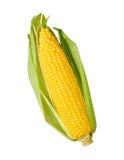 odizolowywający kukurydzany ucho zdjęcie stock
