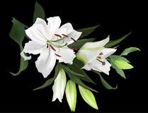 Odizolowywający na czarnej białej lelui kwitnie wiązkę Obraz Stock