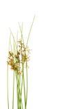 odizolowywający nad roślinami biały Zdjęcia Royalty Free