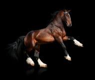 odizolowywający podpalany koń Zdjęcia Royalty Free