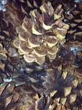 odizolowywający tło rożki protestują sosnowego biel Fotografia Stock