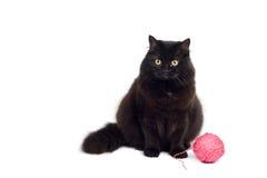 odizolowywający czarny kot Obrazy Royalty Free