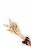 Odizolowywający na biel pszeniczni ucho. Zdjęcie Stock