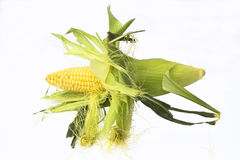 Odizolowywający na biel ucho kukurudza Zdjęcie Stock