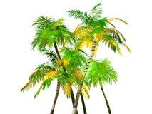 Odizolowywający tropikalni Drzewka Palmowe, Obrazy Royalty Free