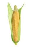 odizolowywający kukurydzany ucho Zdjęcia Stock