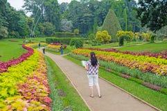 Odkrywać ogród botanicznego Zdjęcie Stock