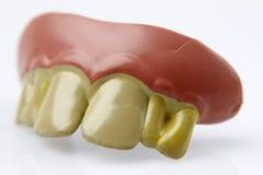 Odkrywczość zęby obrazy royalty free