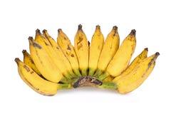 Odla den gula asiatiska bananen som isoleras på vit Arkivbild