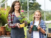 Odla det säsongsbetonade tillväxtbegreppet för den trädgårds- naturen Royaltyfri Bild