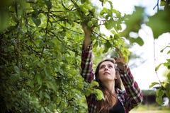 Odla det säsongsbetonade tillväxtbegreppet för den trädgårds- naturen Royaltyfri Foto