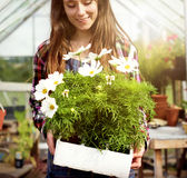 Odla det säsongsbetonade tillväxtbegreppet för den trädgårds- naturen Fotografering för Bildbyråer
